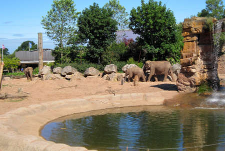 chester: Photo of Elephant in Chester ZOO.
