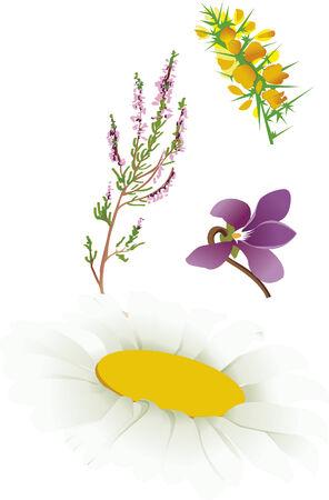 bucolic: alcuni fiori