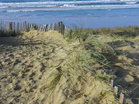 delaying: sand dunes delaying the advance of the sea