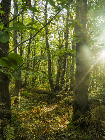 sunshines: Sunshine light forest