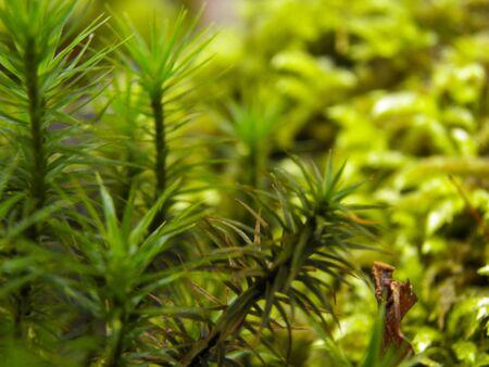 brake fern: Glose-up on foarm
