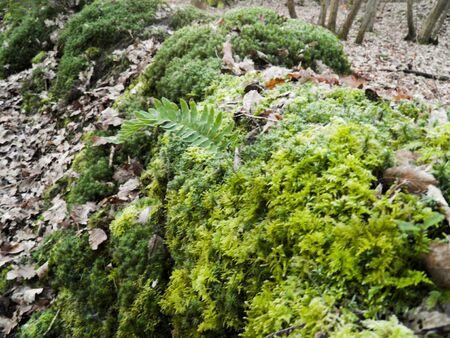 brake fern: foam, on little wall