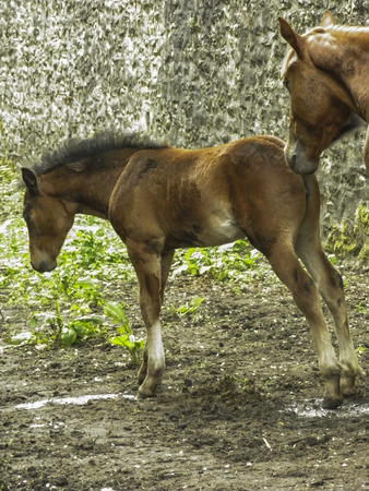 foal: foal with mother