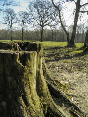 clearing: Stump near a clearing Stock Photo
