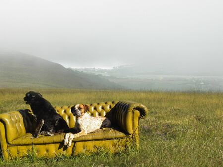 peacefull: Two dogs on sofa Stock Photo