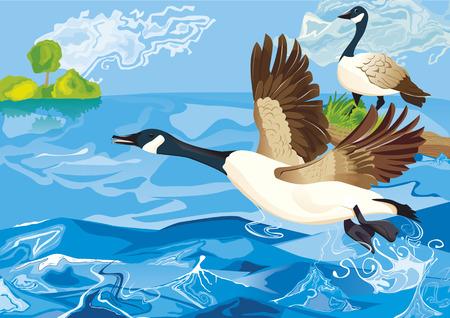 ganso salvaje en el lago