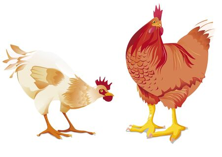 fowls: white hen and red hen