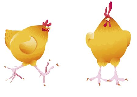 husbandry: Hen in front and side