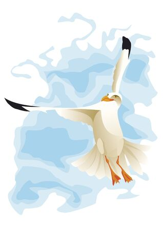 wingspan: Seagull flying with wind