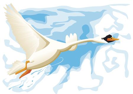 mute swan: Swan flying