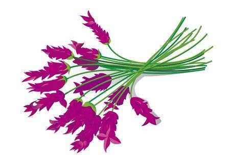 spa still life: Lavender Illustration
