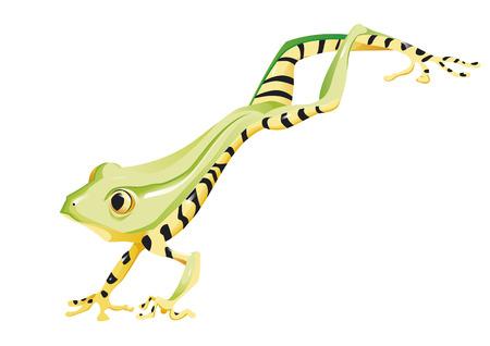 poison dart: frog jumping