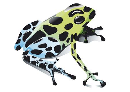 poison frog: rana venenosa
