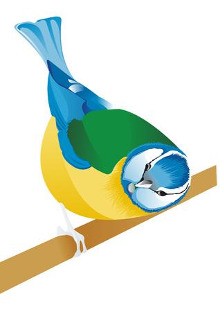 chickadee: tit bird Illustration