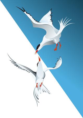 break free: black heat gull in fly