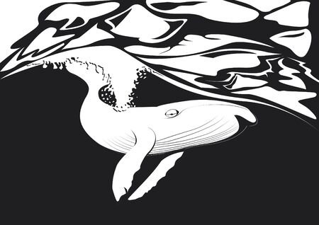 whale under the sea in black and white