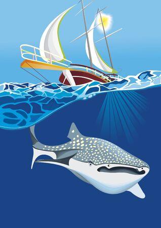shark-whale swim under boat