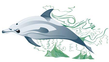swiming: Dolphin swimming in the sea