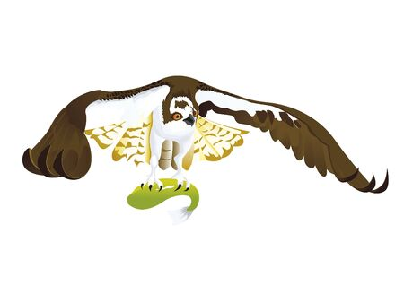 osprey: Osprey with his fish food