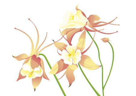Orange grannys bonnet Illustration