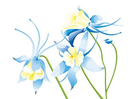 Blue grannys bonnet Illustration
