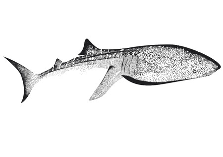 Whale shark with pot on a plain background. Illustration