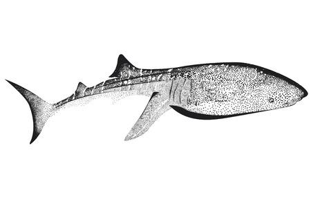 Walvishaai met pot op een effen achtergrond.