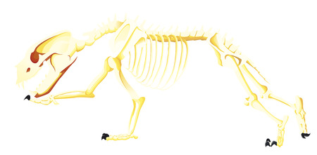 91001182 skeleton bear is running?ver\=6 bear skeleton diagram wiring diagram electrical