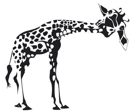 Leaning giraffe in black and white design
