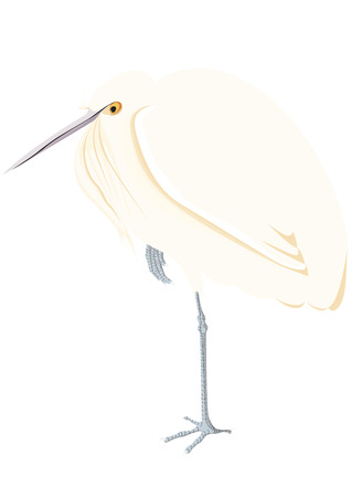 Egret isolated in color vector