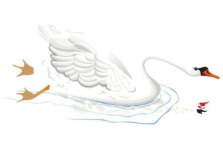 one swan isolated in vector color