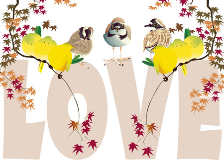 plover and yellow birds in love