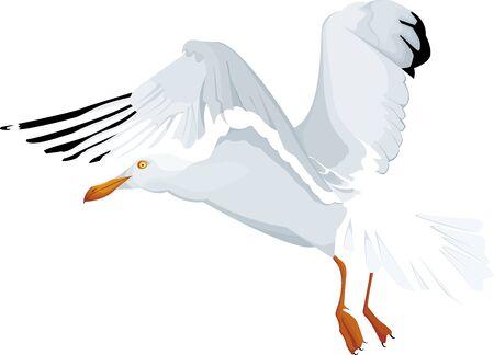 Seagull in flying isolated Ilustração