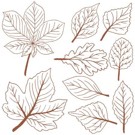 Conjunto de dibujos vectoriales. Colección de hojas de otoño marrones. Dibujo de esquema