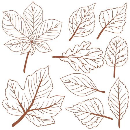 Set of vector drawings. Collection of brown autumn leaves. Outline drawing