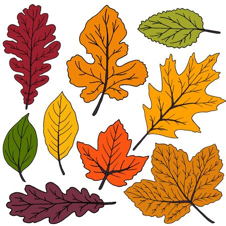 Set of vector drawings. Collection of colorful autumn leaves isolated on a white background. Good for social networks, advertising Illustration