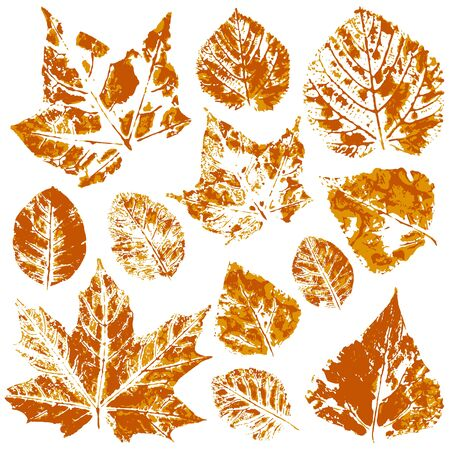 Set of vector drawings with acrylic paints. Collection of autumn leaves in orange. Two-tone prints of paint. Good for autumn design of banners, flyers, advertising, printing materials Illustration