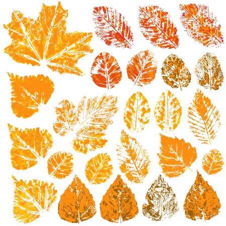 Collection of autumn leaves in orange. Two-tone prints of paint. Set of vector drawings with acrylic paints. Good for autumn design of banners Illustration