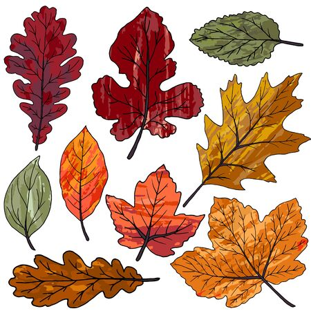 Vector drawings. Collection of colorful autumn leaves isolated on a white background. Leaves with watercolor texture