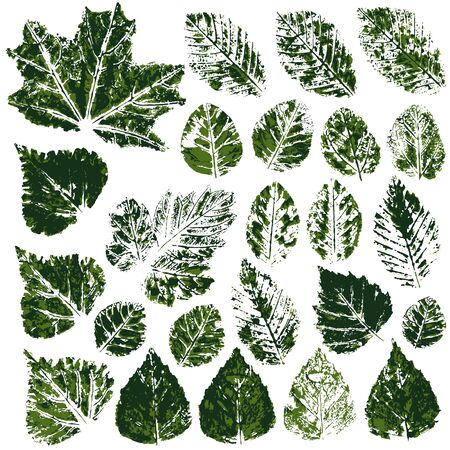 Collection of autumn or spring green leaves. Set of vector drawings with acrylic paints. Two-color print, imprint. Good for the design of banners, flyers, advertising materials