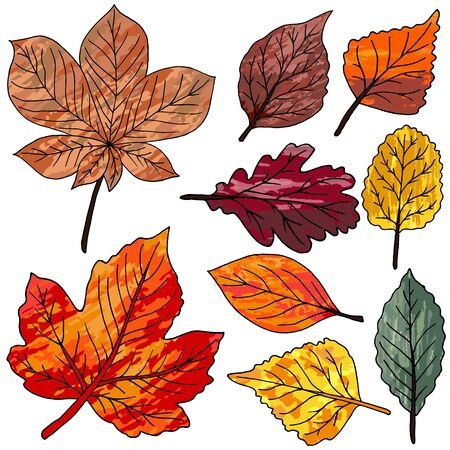 Set of vector drawings. Collection of colorful autumn leaves isolated on a white background. Leaves with watercolor texture