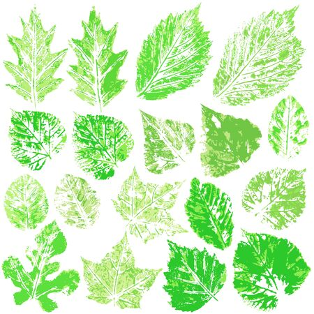 Set of vector drawings with acrylic paints. Collection of autumn or spring green leaves. Two-color print, imprint. Good for the design