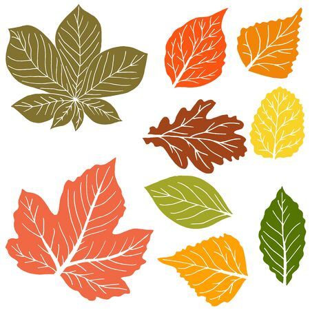 Vector drawings. Collection of colorful autumn leaves isolated on a white background. Good for social networks, advertising. Cartoon style