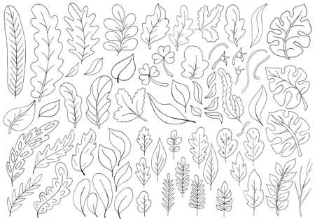 Large collection of monochrome leaves. Vector elements for your design. Leaves of monstera, trees, flowers. Set of vector illustrations in hand draw style