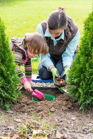 Gardening, planting, flowers bulbs - mother and daugther planting tulip bulbs photo