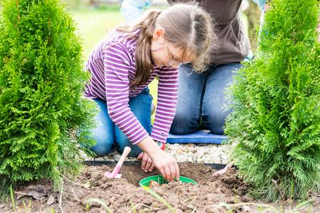 daugther: Gardening, planting, flowers bulbs - mother and daugther planting tulip bulbs