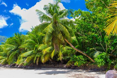 untouched: Untouched tropical beach in Seychelles Stock Photo