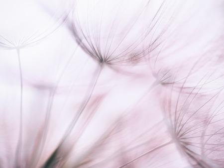 Vintage Pastel Purple abstract dandelion flower background, extreme closeup with soft focus, beautiful nature details Banque d'images