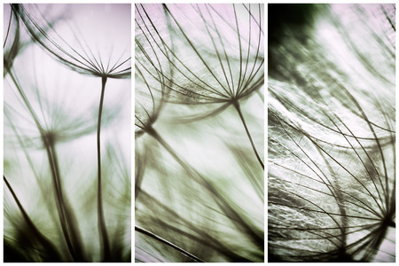 soft colors: Composition - Vintage watercolor abstract background - monochrome dandelion flower - extreme closeup with soft focus, beautiful pastel nature details Stock Photo
