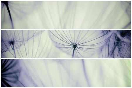 Composition - Vintage watercolor abstract background - monochrome dandelion flower - extreme closeup with soft focus, beautiful pastel nature details Banque d'images